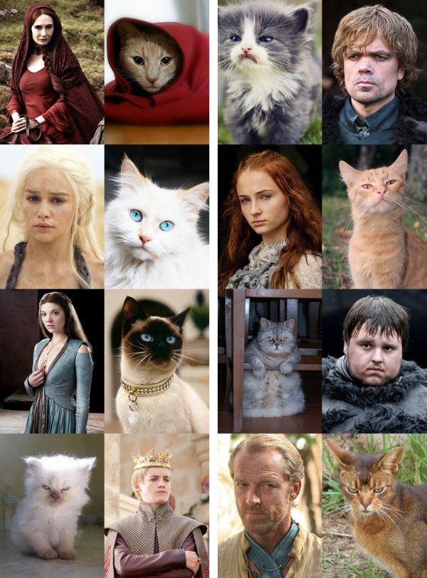 game-of-thrones-characters-as-cats